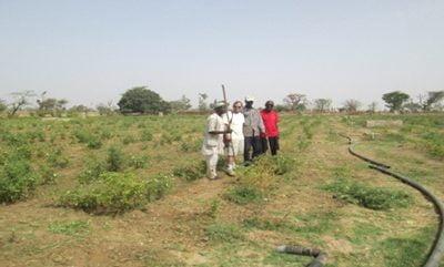 Proyecto Sandiara: Puesta en marcha de huertas tradicionales, así como formación para cultivo con agua de mar. Sandiara (Senegal)