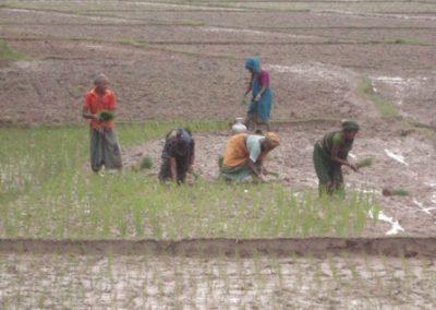 Lucha Contra El Cambio Climático y Adaptación a este en Bangladesh