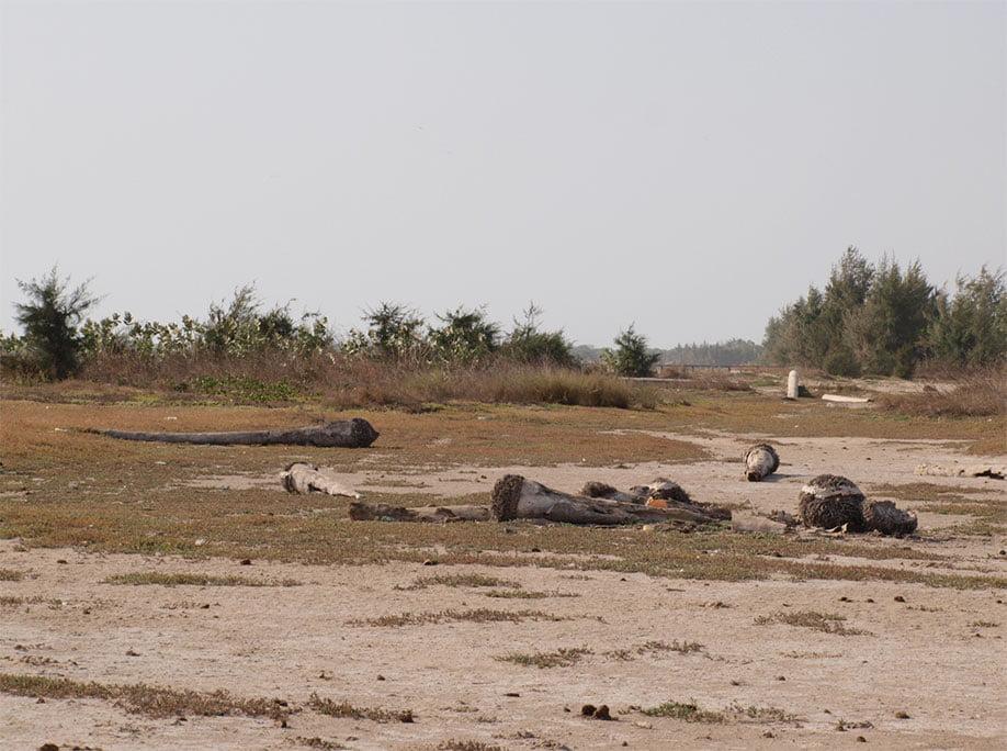 Degradación suelos, pastoreo intensivo.