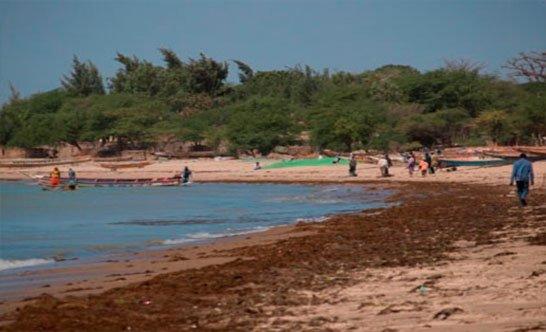 Ecosistema costero. Centro África.