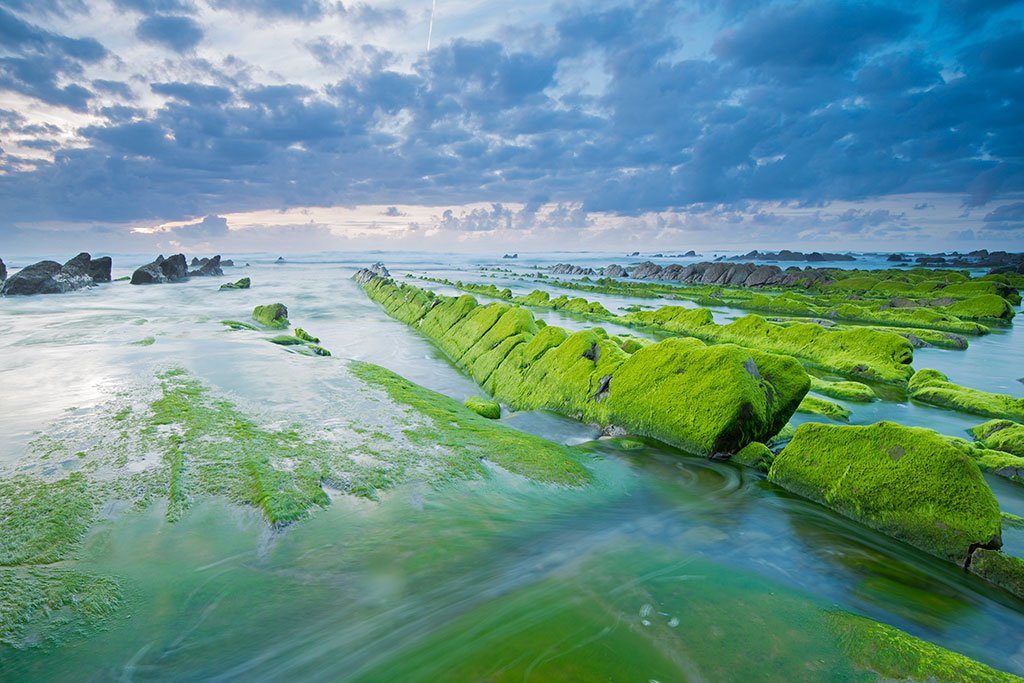Metabolización del agua de mar en vegetal (foto: Luis Legarda)