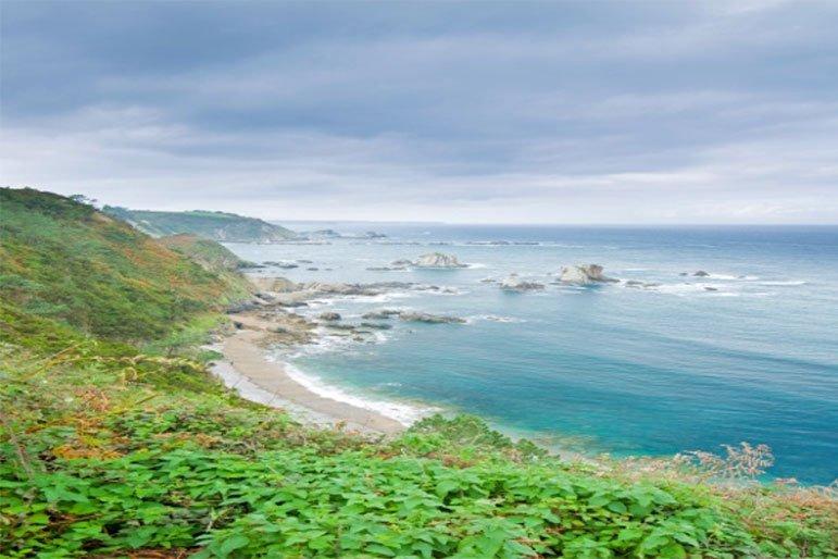 Vegetación frondosa ecosistema marino
