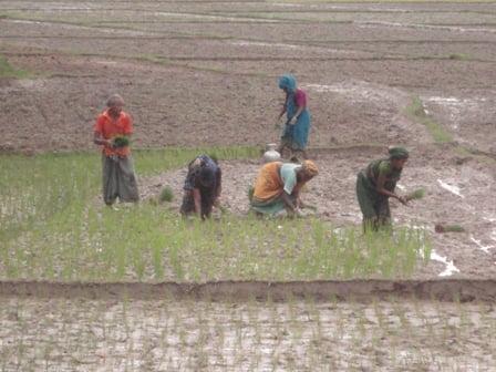 Mujeres plantando arroz. Mrigen Hagidok / adentra